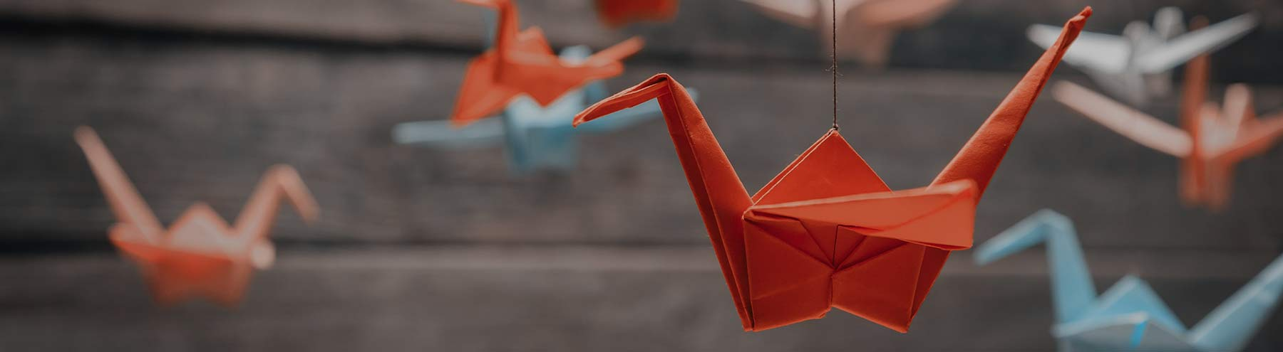 מה הקשר בין פרה, מדפסת דיגיטלית ואוריגמי?
