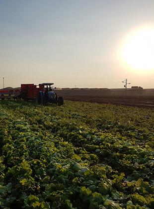 שטראוס – חקלאות ישראלית